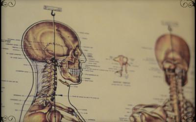 Aging & the Brain